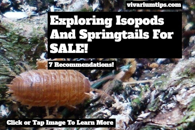 isopods and springtails for sale