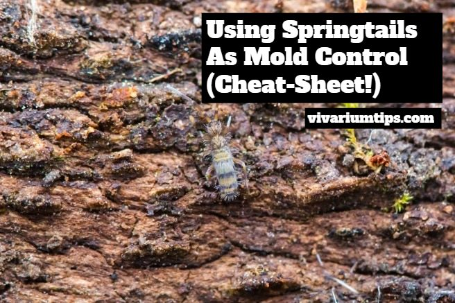 using springtail as mold control