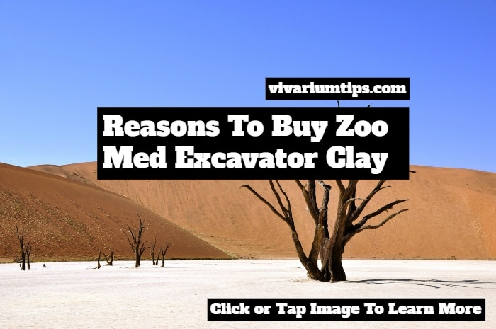 zoo med excavator clay