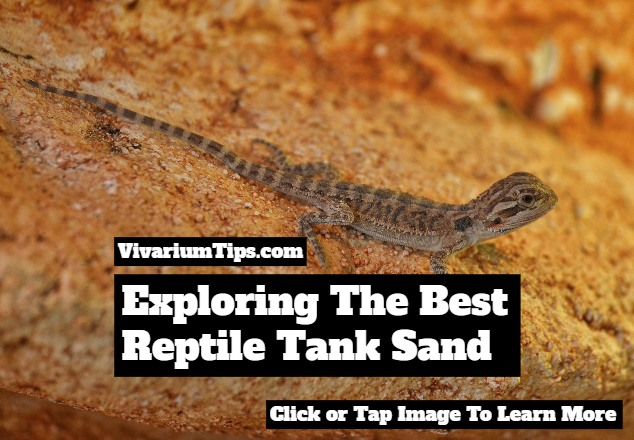 best reptile tank sand