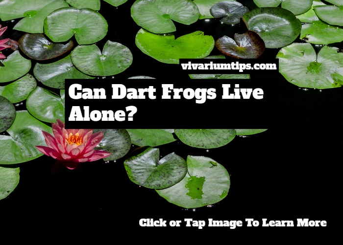 can dart frogs live alone