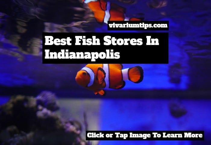 fish stores in indianapolis (1)