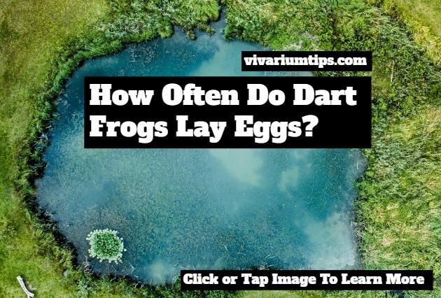 how often do dart frogs lay eggs