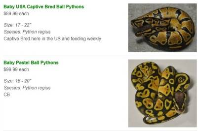 lllreptile python