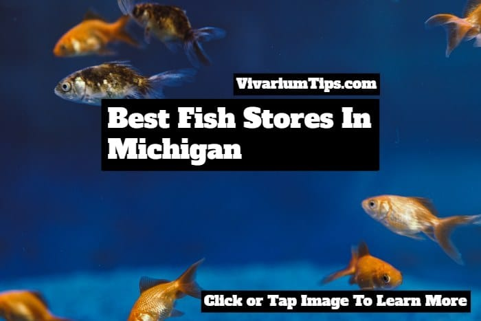 best fish stores in michigan