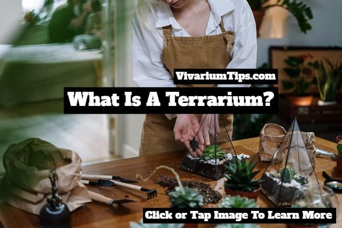 what is a terrarium