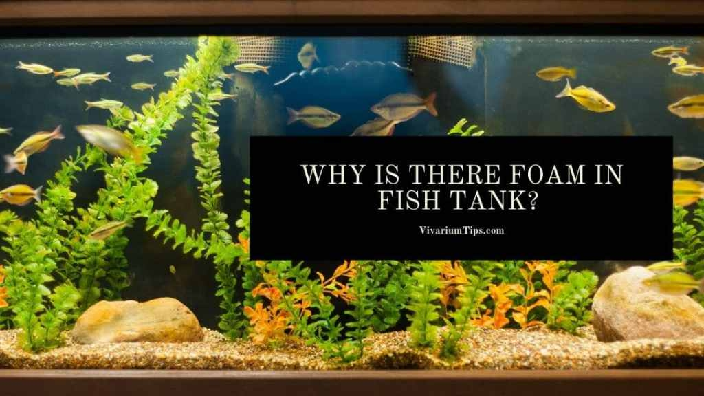 Why Is There Foam In Fish Tank?