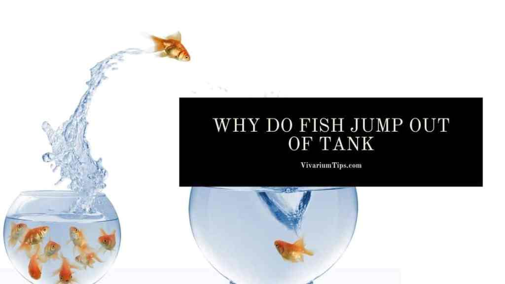 Why Do Fish Jump Out Of Tank