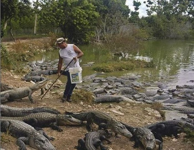 Crocodile Farmers