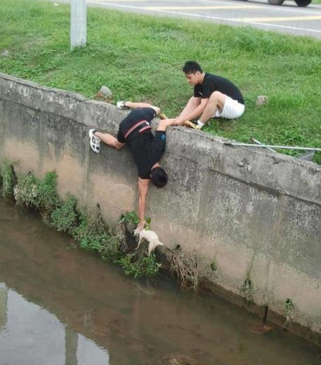 The bros who worked together to save a cat
