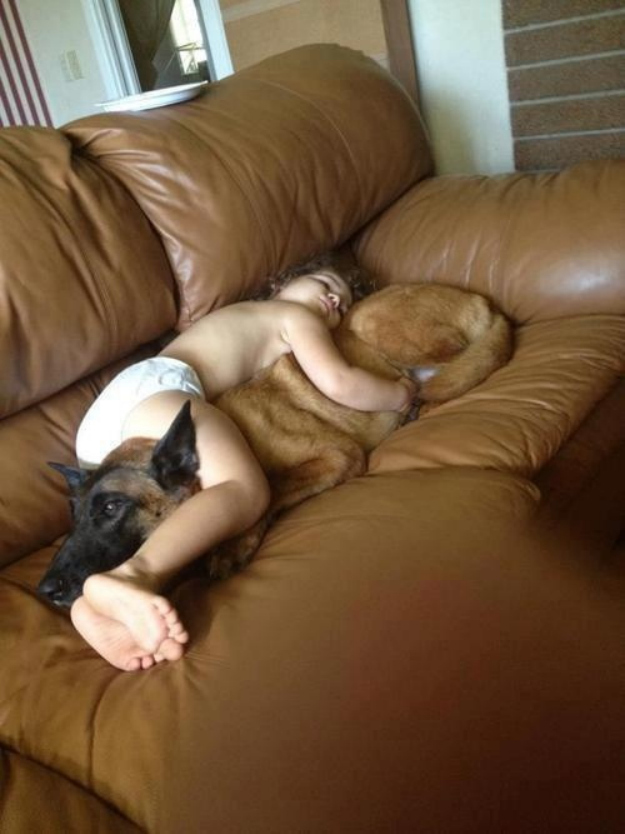 This German shepherd that will be the best kind of pillow to nap on.