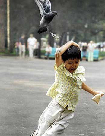 White-hot steaming bird poop on your face.