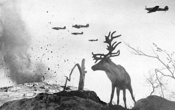 A shell shocked reindeer looks on as World War II planes drop bombs on Russia in 1941