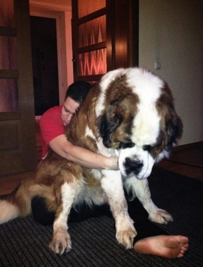 This dog who would be a great shoulder to cry on.