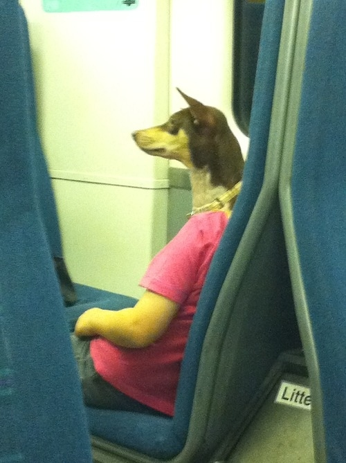 The perfectly timed dog head photo: