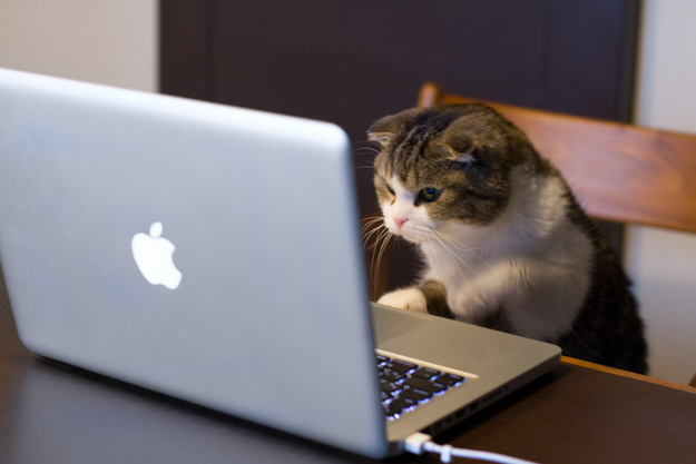 The Cat Who Spent His Vacation At Computer Camp