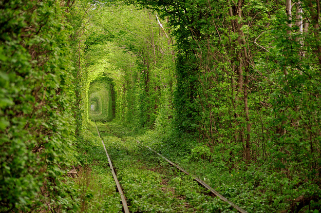 Tunnel of Love - Kleven, Ukraine
