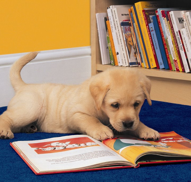 The Dog Who Actually Did Extra Reading For French Class
