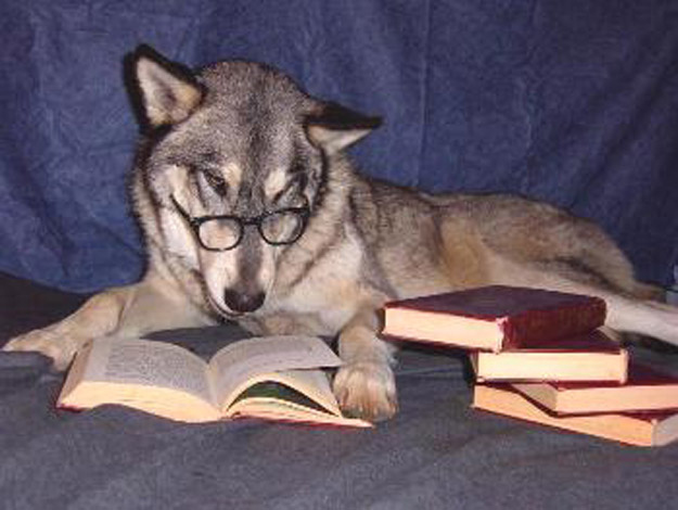 The Dog Who's Completed The Optional Reading List