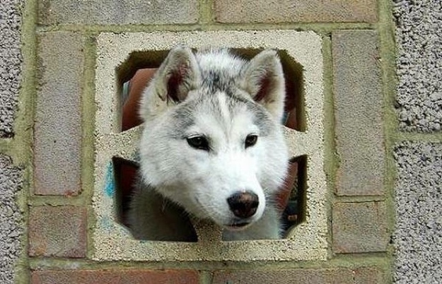 Stuck in a cinder block.