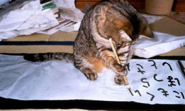 The Cat Who's Writing A Letter To Her Foreign Penpal