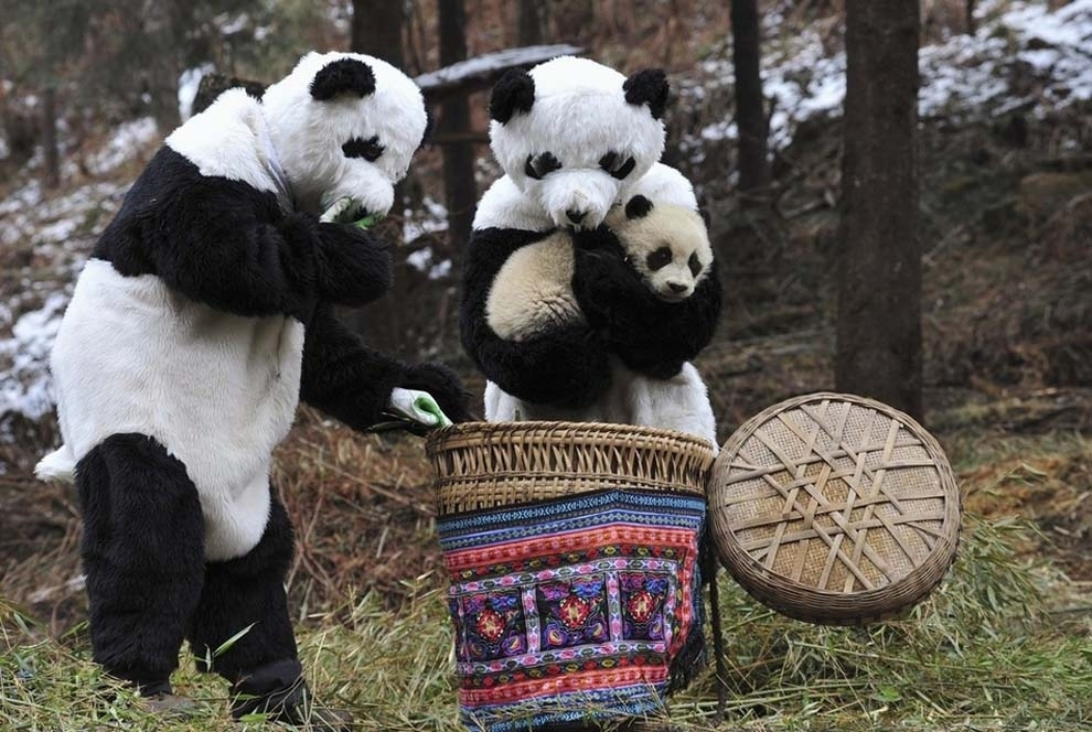 And then also the time that this panda thing happened.