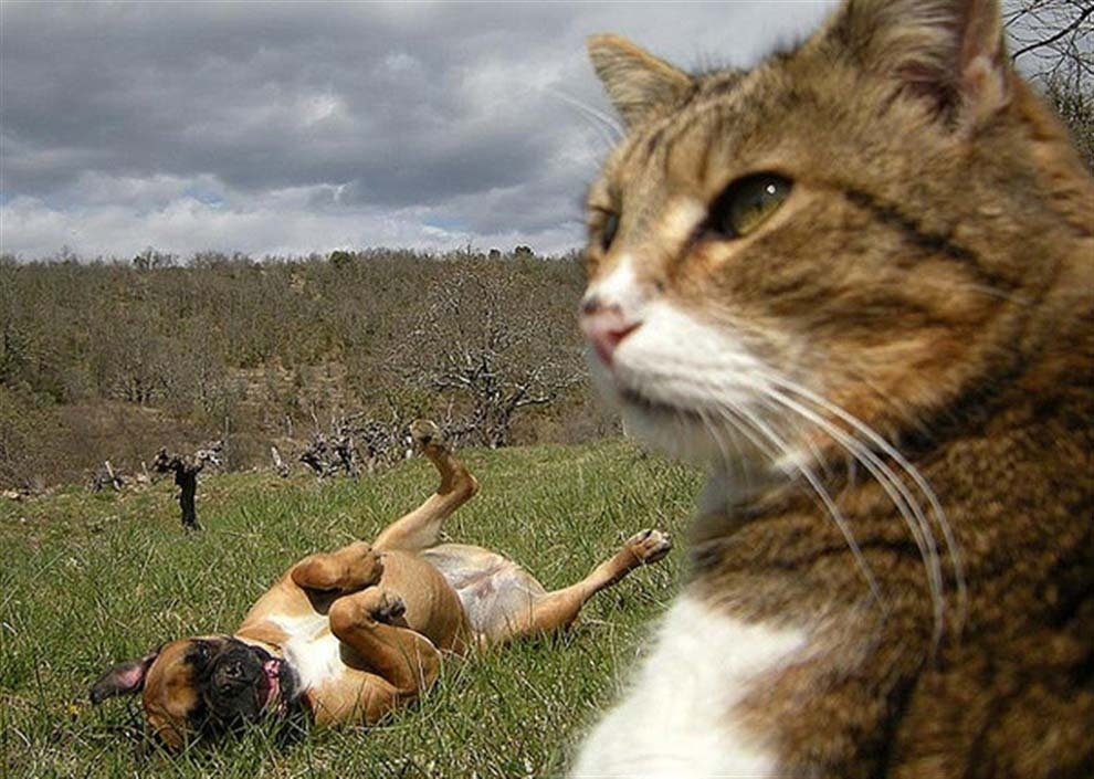 The serious cat who got photobombed by his idiot friend.