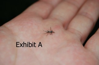 smashed_aedes_mosquito