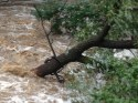 A felled tree.