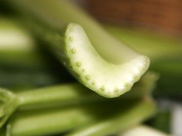 Celery_cross_section