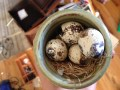 Quail eggs that a sales person gave to Scrotus hoping it would seal the deal on a $10,000 couch. Right. TRASH.