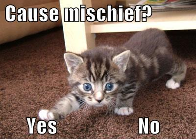 funny-pictures-kitten-decides-whether-to-cause-mischief