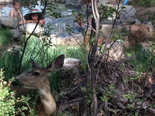 Deer often drink from the pools