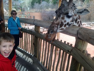 Giraffe exhibit
