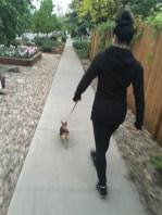 Walking Scheissehund