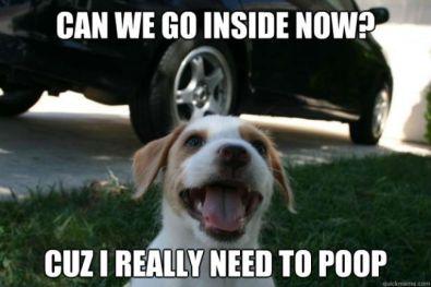 puppy-meme-updated.jpg