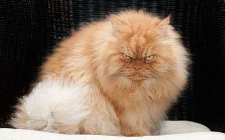 Angry_Cat_1_3269958k.jpg