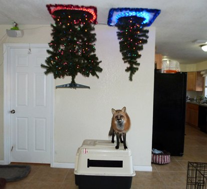protecting-christmas-tree-from-dogs-cats-pets-17-585a73af7574f__605.jpg