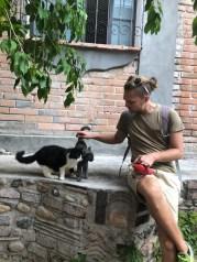 Cats love Steven