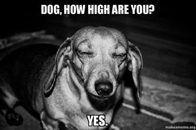 dog-how-high-yz39c5.jpg