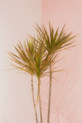 rsz_green-plant-on-white-wall-3489128