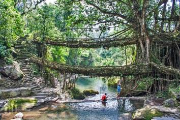 Double Decker Living Root Bridge - a marvel of nature