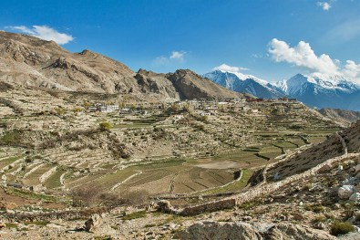 Farming fields of Nako village in Spiti Valley