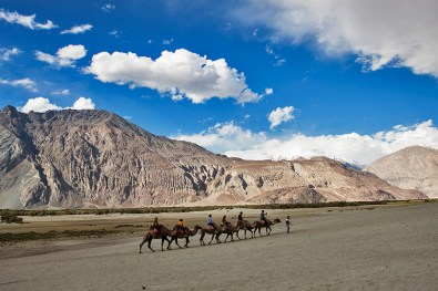 2 humped camel safari at Hunder in Nubra Valley