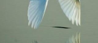 Shackles Broken.. Free Birds Fly High...!