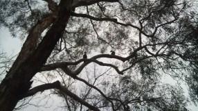 Patos na árvore (???)