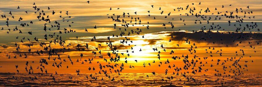 nature, animals, bird-2746726.jpg