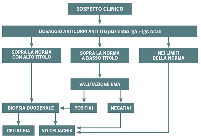 Follow-up diagnosi celiachia - Iter diagnosi adulti