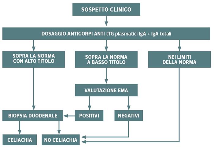 Follow-up diagnosi celiachia - Iter diagnosi adulti