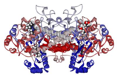 wpid-Cyclooxygenase-1_with_bound_ibuprofen_1EQG-2013-02-19-15-26.png
